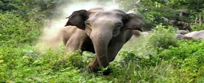 नवादा में जंगली हाथी का आतंक, दो लोगों को कुचलकर मार डाला